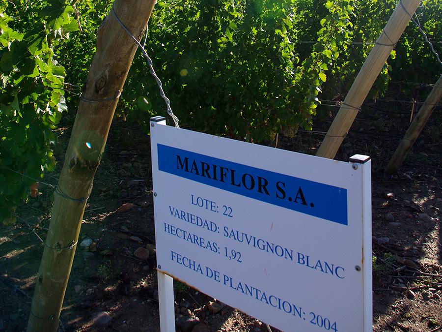 Mariflor Sauvignon Blanc 2015 - Rolland Collection